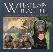 What Labs Teach Us