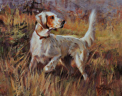 Orange and White Setter
