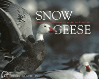Snow Geese: Grandeur & Calamity on an Arctic Landscape