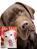 Just Labs Special Offer