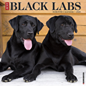 Calendar - Just Black Labs 2020 Wall Calendar