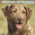 Calendar - Just Chesapeake Bay Retrievers 2020 Wall Calendar