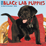 Calendars - Just Black Lab Puppies 2020 Wall Calendar