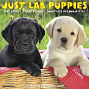 Calendar - Just Lab Puppies 2020 Wall Calendar