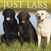 Calendar - Just Labs 2020 Wall Calendar