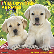 Calendar - Just Yellow Lab Puppies 2020 Wall Calendar