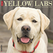 Calendar - Just Yellow Labs 2020 Wall Calendar