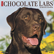Calendar - Just Chocolate Labs 2020 Wall Calendar