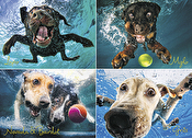 Underwater Dog: Splash Puzzle