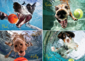 Underwater Dogs: Play Ball! Puzzle