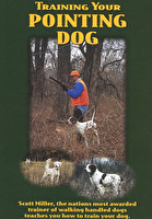 Training Your Pointing Dog DVD